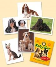50 csomag matrica a  Kutyatár matricás albumhoz